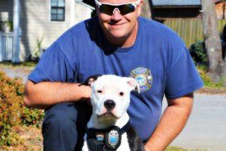 Após ter parte do corpo queimado, cão passa a integrar equipe de bombeiros