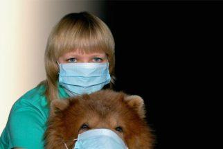 Posso passar gripe para meu cachorro?