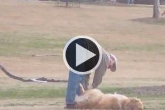 Para rir: cão se joga no chão e se recusa a voltar para casa