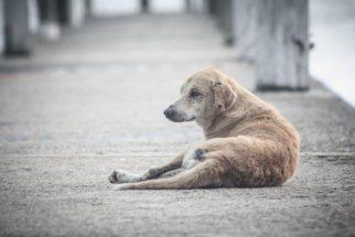 Como ajudar um cão de rua?