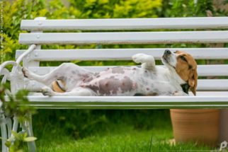 Grávida, cadelinha faz ensaio fotográfico com 'altas doses' de fofura