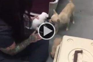 Vídeo: em abrigo, cadela tem reencontro emocionante com filhotes
