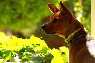 10 fatos sobre cães que vão te surpreender