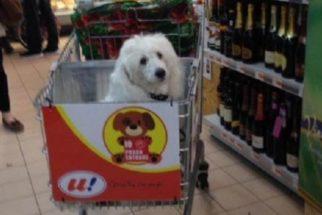 Itália: supermercado adapta carrinhos de compras para acomodar cachorros