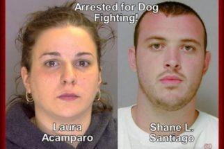 Dono de rinha de cães é sentenciado a 15 anos de prisão
