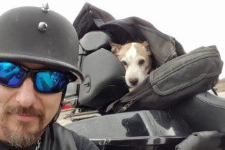 Motociclista salva cão abandonado e o torna seu 'copiloto'