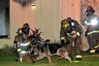 Cão ajuda bombeiros a salvar crianças em incêndio de casa