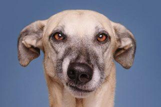 Ensaio fotográfico mostra cães com expressões hilárias