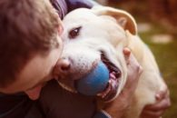 Brincadeiras para estimular a inteligência dos cachorros