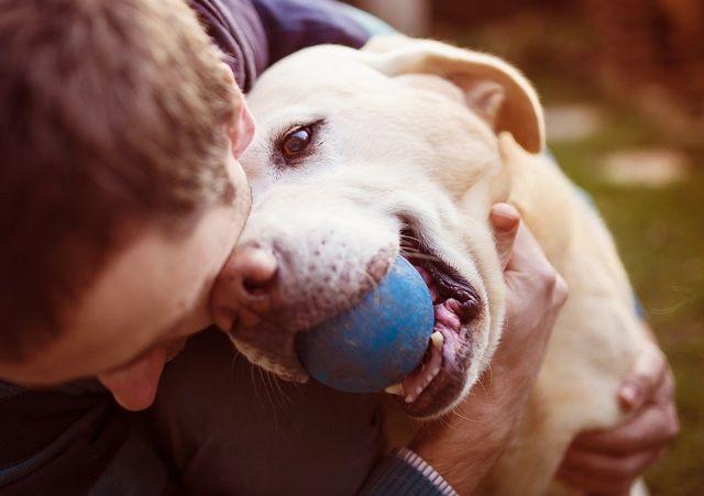 Aprenda brincadeiras para estimular a inteligência dos cachorros