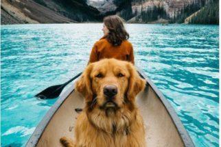 Aspen: o cão sensação do Instagram com mais de 150 mil seguidores