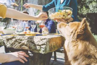 Entenda o perigo de alimentar os cães com restos de alimentos
