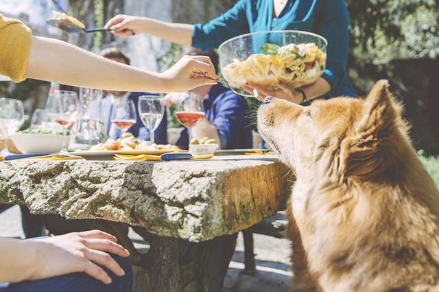 Oferecer restos de comida aos cães faz perder o controle dos nutrientes que ele ingere