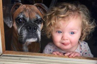 12 motivos pelos quais os cães idosos são os melhores