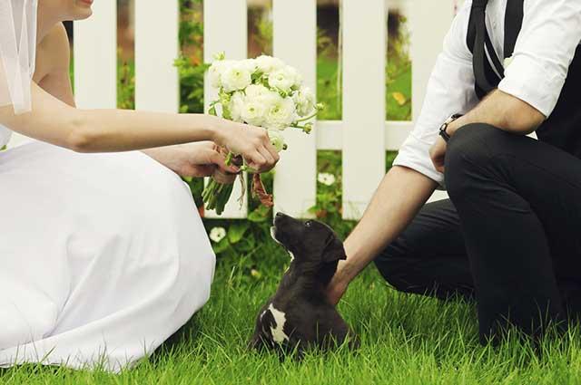Caso o cão não possa ir a igreja, ele pode participar do casamento indo para a festa