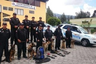 Cães ajudam no resgate de vítimas de terremoto no Equador