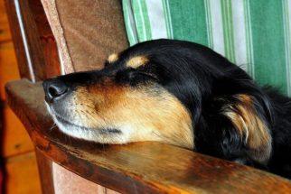 Calminho, calminho: música erudita promete relaxar os cães