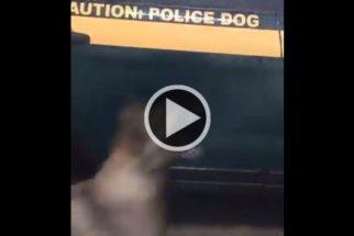 Cão policial 'ajuda' parceiro a lavar viatura e faz sucesso na web