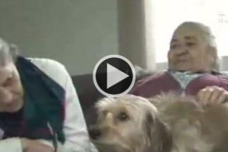 Casa de repouso de Joinville adota cadelas para entreter idosos