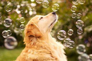 Entenda por que o cão Champ está sendo chamado de 'o mais feliz do mundo'