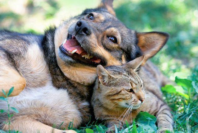 como-estimular-amizade-entre-caes-e-gatos