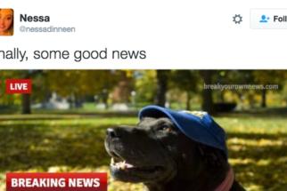 8 tweets de cães que são estranhos, mas muito engraçados