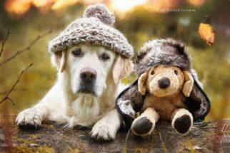 Série mostra belas fotos de cão com seus melhores amigos
