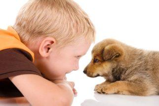 Amor entre cão e ser humano ocorre no contato visual, diz estudo