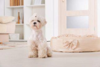 Os principais passos para ter uma casa segura para o cão
