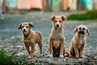 CCJ do Senado brasileiro aprova Estatuto dos Animais