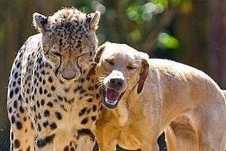 Veja amizades improváveis entre cães e outros animais