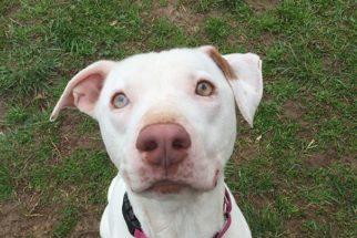 Após ser adotado, cão não consegue mais parar de 'sorrir'