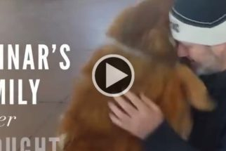 Vídeo: cães perdidos demonstram euforia ao reencontrar tutores