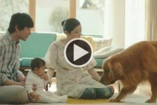 Vídeo: cão encontra maneira inesperada de se aproximar de criança