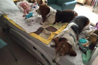 Cães fazem companhia em hospital a bebê vítima de AVC