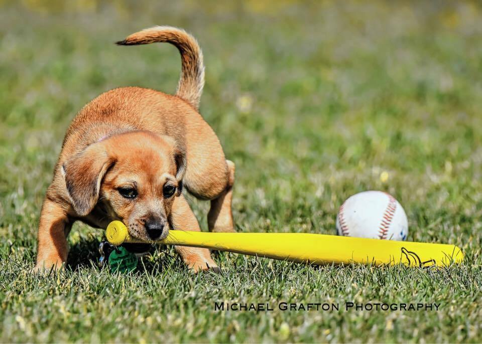 daisy-nova-mascote-de-time-de-basebol