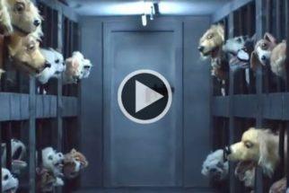 Vídeo mostra o que passam os cães de pet shops até serem postos à venda