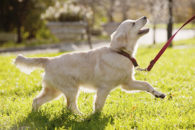 Por dentro do período da adolescência dos cachorros