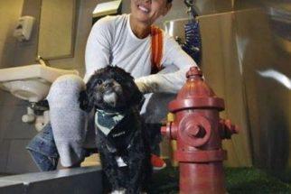 Aeroporto Internacional JFK agora tem banheiro para animais