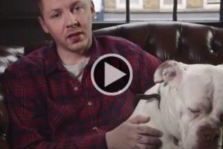 Artistas britânicos protestam contra festival de carne de cachorro na China