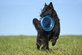 As 10 raças de cachorros que adoram correr