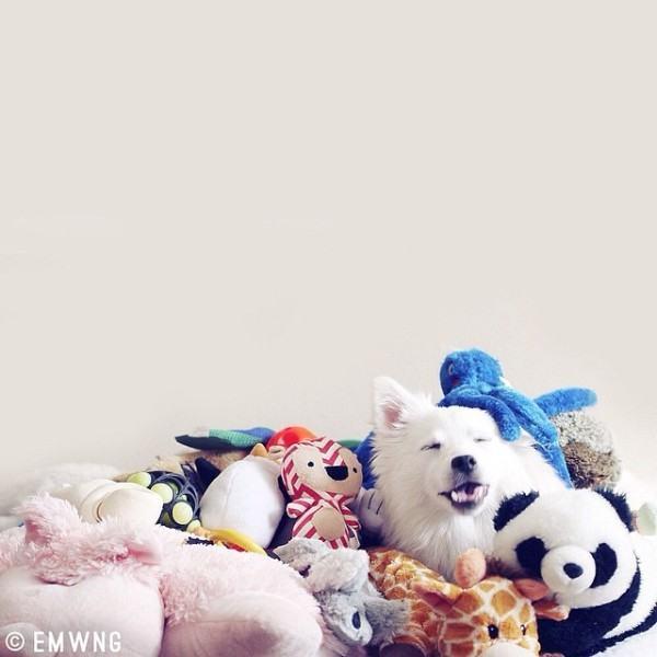 brinquedos-de-cachorros