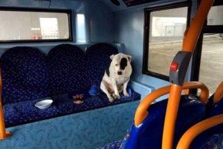 Perdido, cão se recusa a sair de ônibus em que foi deixado