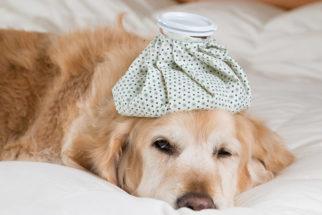 Os cães que sofrem com alergias