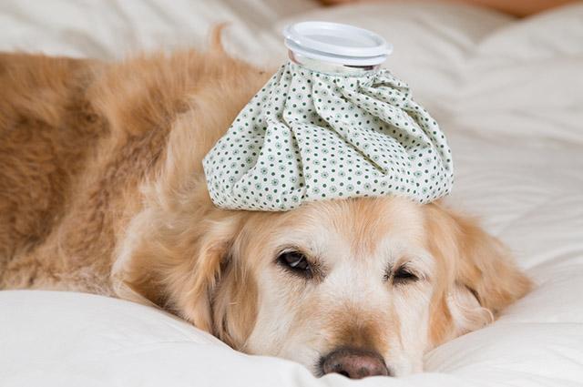 A alergia em cães, assim como em humanos, é a reação do corpo a um agente externo nocivo