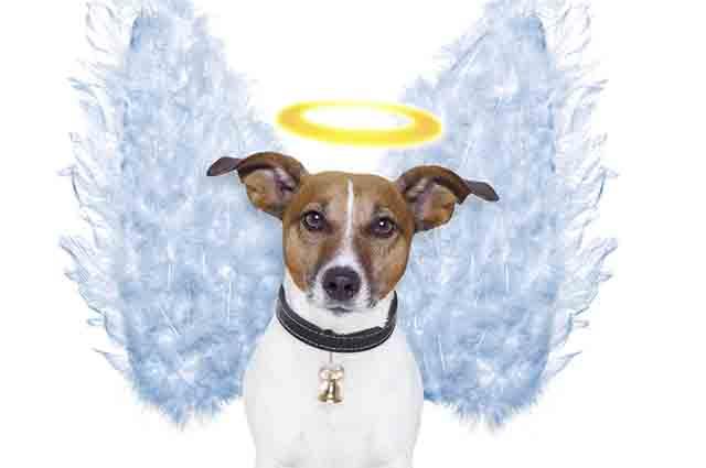 Em caso de morte, o tutor precisa optar por enterrar ou cremar o corpo do cachorro