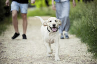 Quando passear com o cão sem coleira?