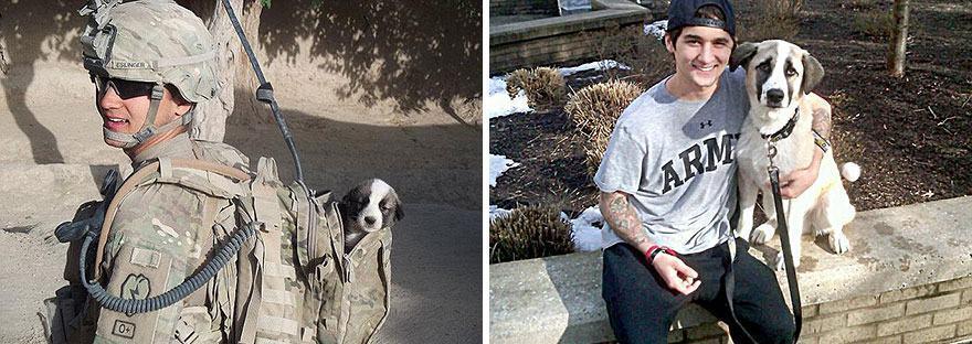 cachorro-resgatado-em-guerra-cinco-meses-depois