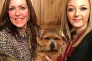 Cãezinhos hilários que não se importam com sua selfie