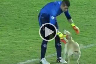 Cão rouba atenção ao invadir jogo da Libertadores da América